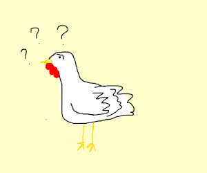 Confused chicken