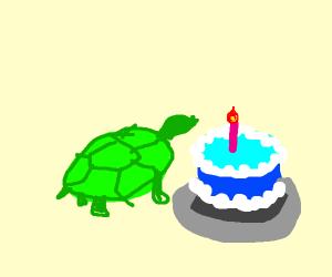 Turtle Celebrating Birthday