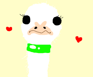 ostrich in love with neon green choker