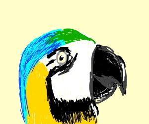 parrot stalks person at school