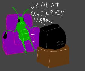 Grasshopper watching reality tv