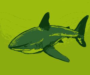 A beautiful, gentle shark