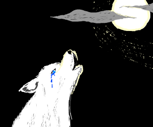 crying white wolf with blue beautiful eyes