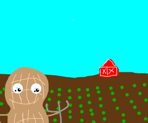 peanut farmer