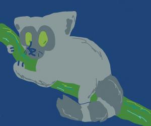 lemur on a vine