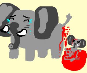 Elephant has a miscarriage