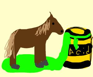 Horse on Acid