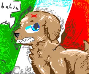 Italian dog is angry yelling balia