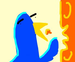 Small blue bird eats yellow and orange cheese