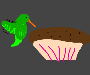 hummingbird eats muffin