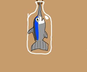 swordfish in a bottle