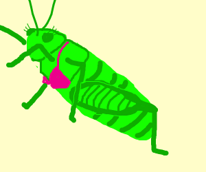 Female cricket with pink bra