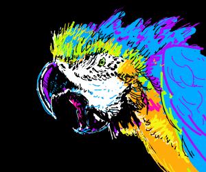 Colorful bird is very upset