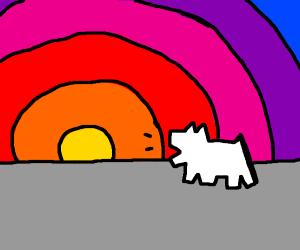 Dog borks at setting sun