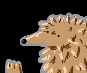 PIO the hedgehog