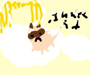 Grumpy cat goes to heaven
