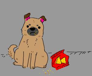 Pet Chips