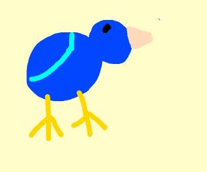 Bird box (Literally)