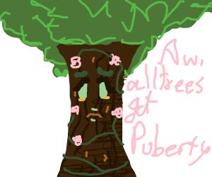 Tree puberty