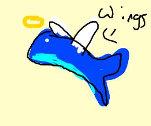 Beautiful Angel Whale <3
