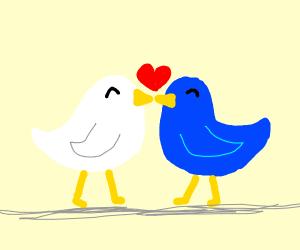 Two (Literal) Lovebirds