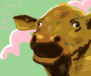 step 5: kill yourself using said cow