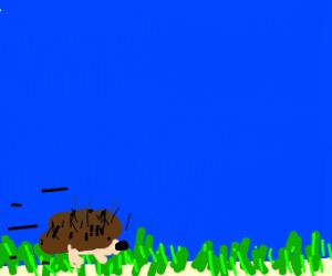 Hedgehog has gotta go fast
