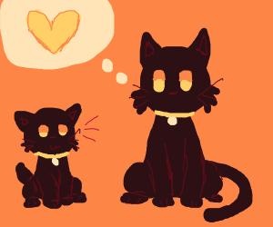 black cat loves pink dog
