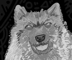 Keeshond (dog)