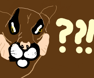 Confused puma