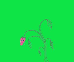 Flower bud cries