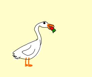 White duck eats strawberry