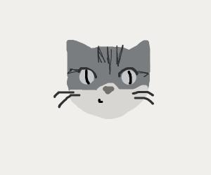 Grey Tabby cat staring at you