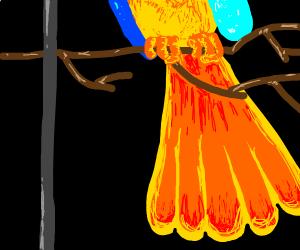 Bright orange bird tail