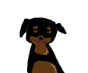 Rottweiler