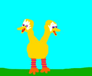Big Bird but Doduo