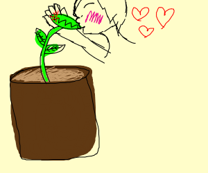 Man in love with carnivorous flower