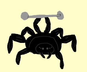 muscular spider