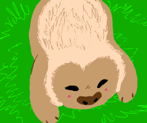 baby sloth in grass