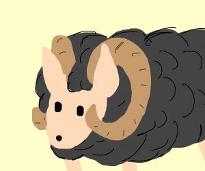 Black wooly ram