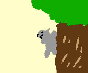 squirrel climbing a tree