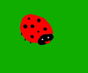 A happy ladybug