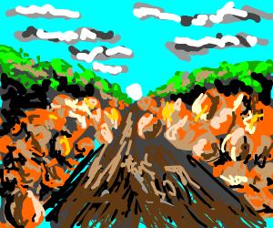 Path in pumpkin patch