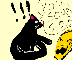 cat scolding old lemon