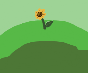 a sunflower in a sunny meadow