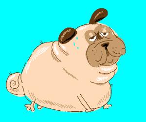 Really fat pug
