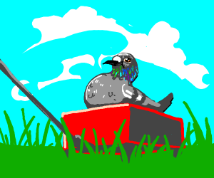 Cute chubby Pigeon in a red wagon