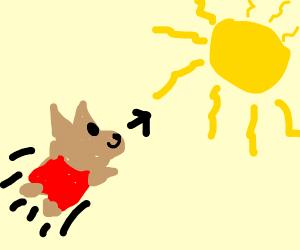 doggo flies into the sun