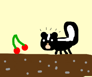 Skunk discovering Cherries
