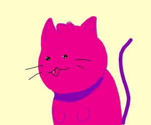 Pink cat blep
